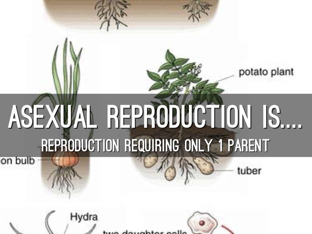 Vegetative Asexual Reproduction Asexual Reproduction b...
