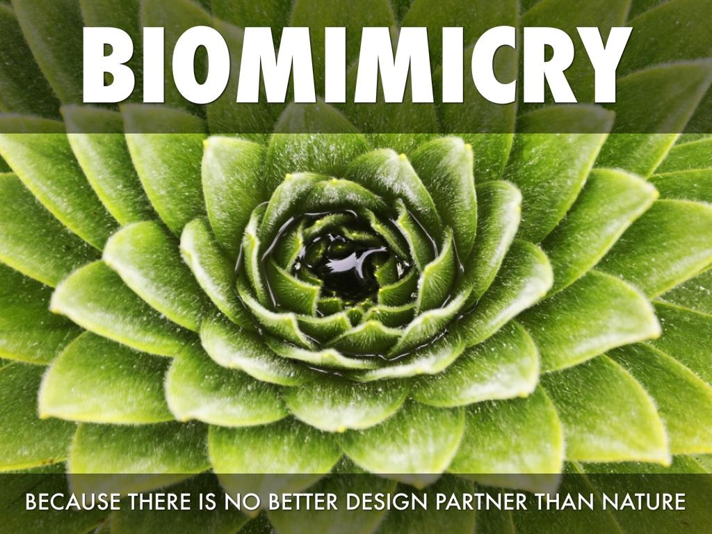 Biomimicry By Bayleamaxwell Id