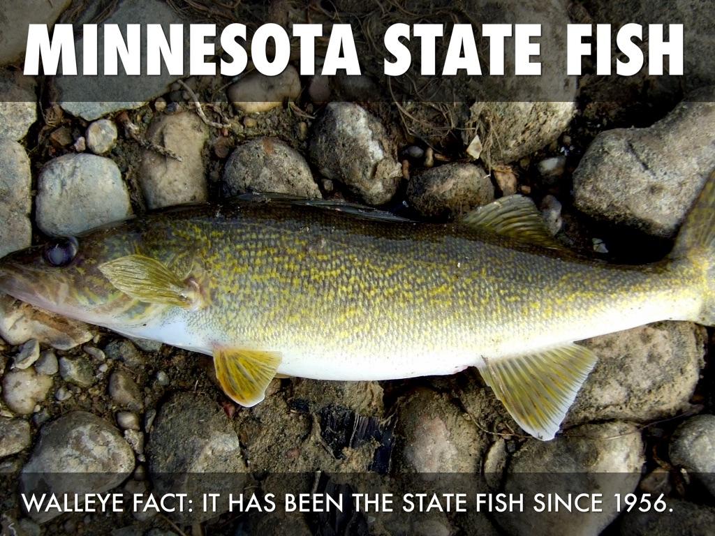 Minnesota State Sybil s by Ashley Lovre