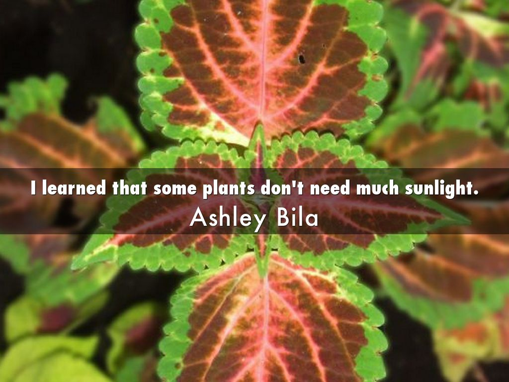 Plants That Do Not Need Sunlight Plants That Don T Need