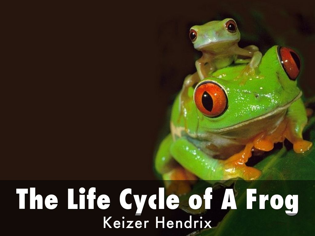 the life cycle of a frog by sheila mortimer