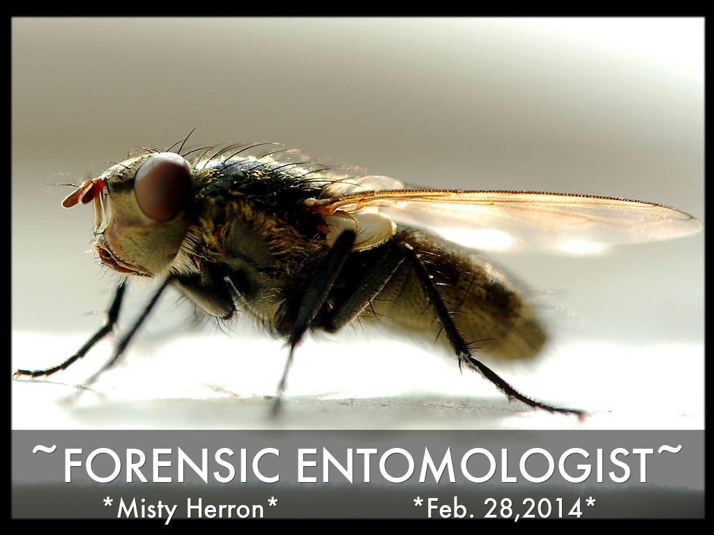 forensics entomology and bugs Author, amoret brandt forensic entomology is the study of insects and other arthropods in a legal context the applications are wide-ranging, but the most frequent.