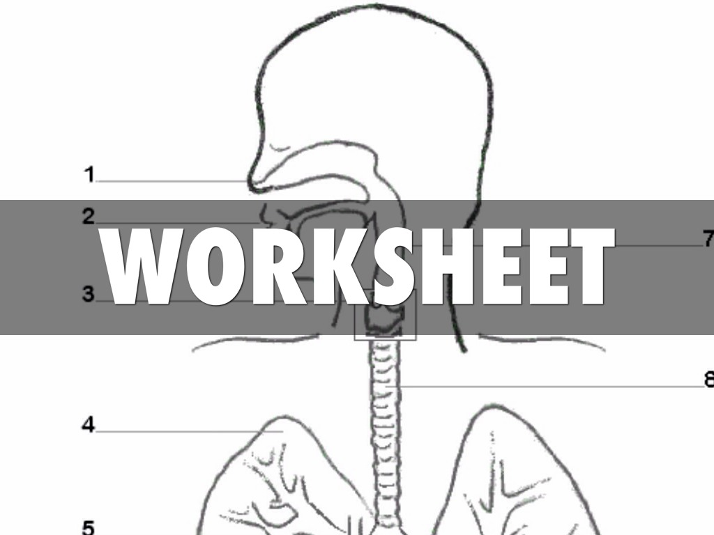 worksheet Respiratory System Worksheet Answers worksheet the respiratory system thedanks for human crossword answer biology worksheets example