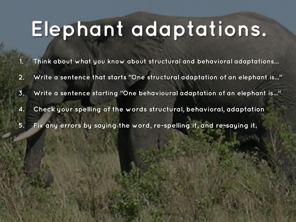 Adaptations Slides for Spelling #3 by Christopher Hunt