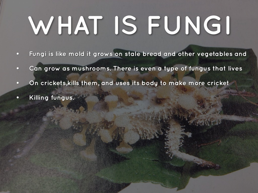 what is mushroom There are many types of mushrooms that offer a long list of health benefits mushrooms are an odd looking group that goes by the name of fungi pronounced, fun gee or fun guy essentially it is neither a plant nor an animal it is a fungus, hence the group name although mushrooms may not be a number.