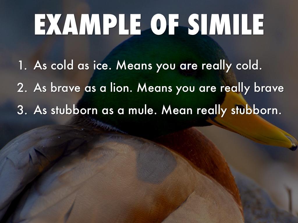 as stubborn as a simile