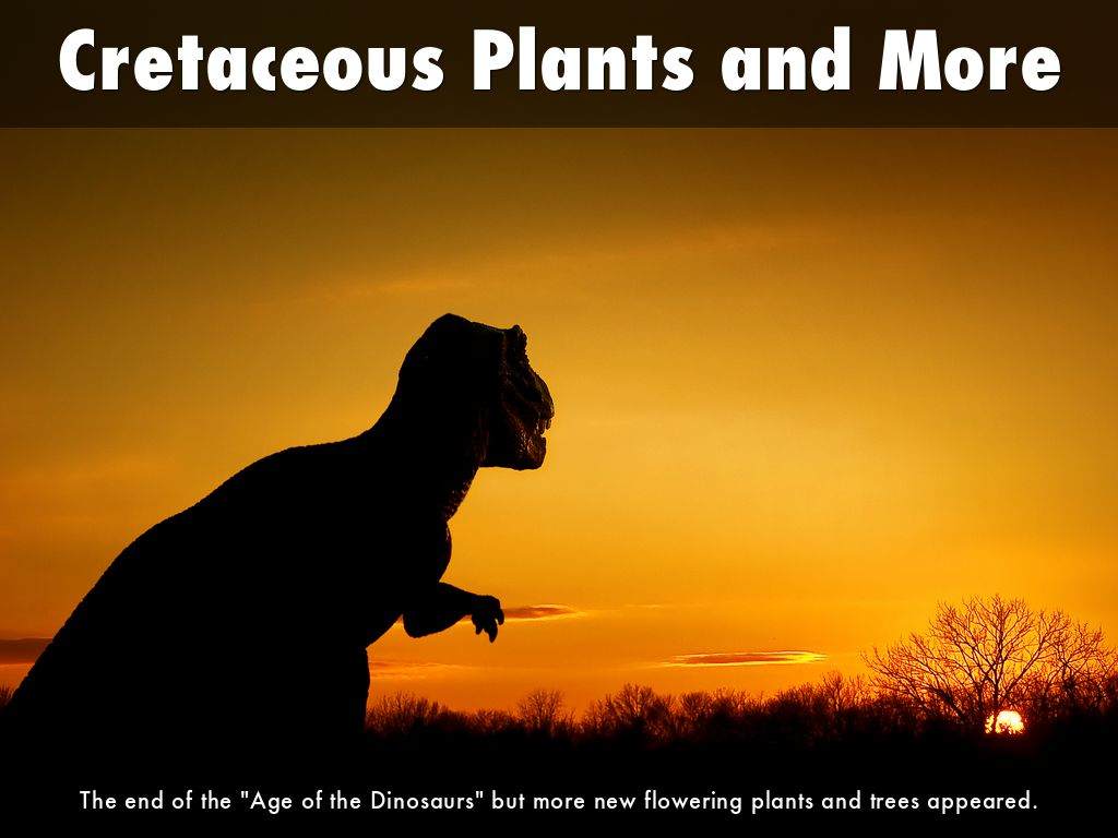 Cretaceous Plants and more
