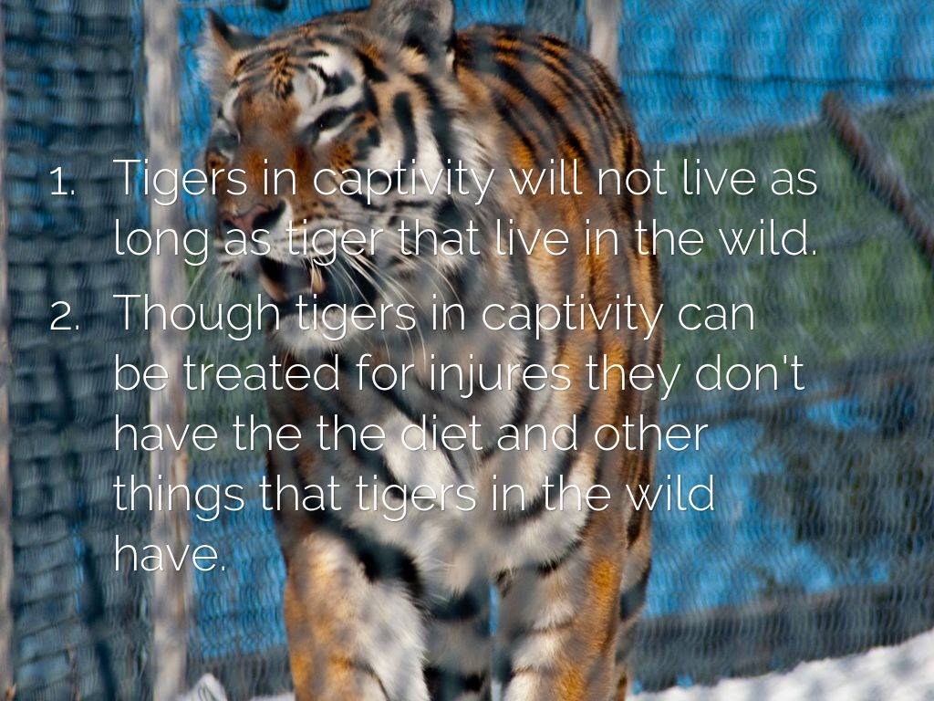 do animals live longer in captivity Many arguments could be made that in captivity, animals can live longer and  safer lives the depression and harsh conditions they experience.