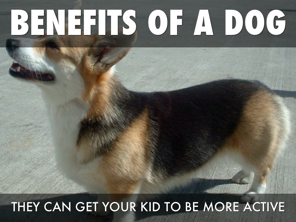 advantages of having a dog The pros of living with small dog breeds there are many benefits about living with a small dog, especially if you live in an urban area small dogs are generally .