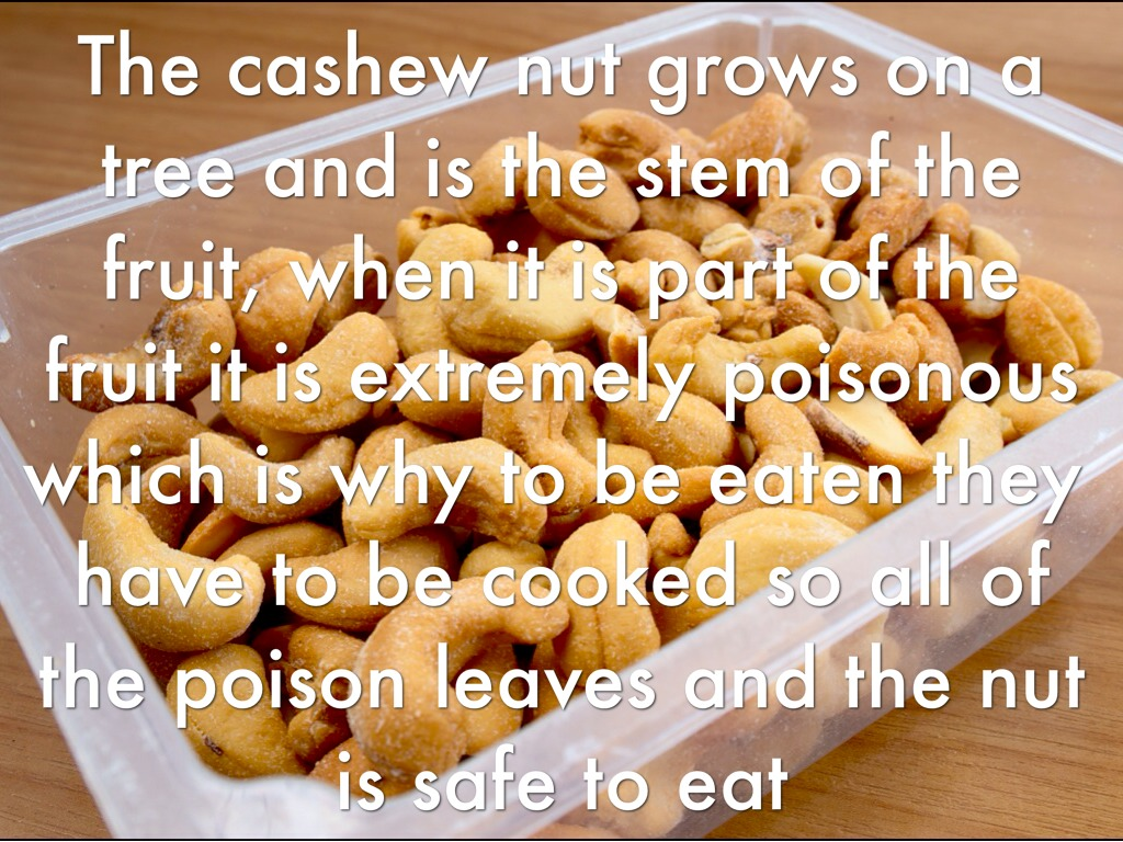 do cashews come from a fruit figs fruit