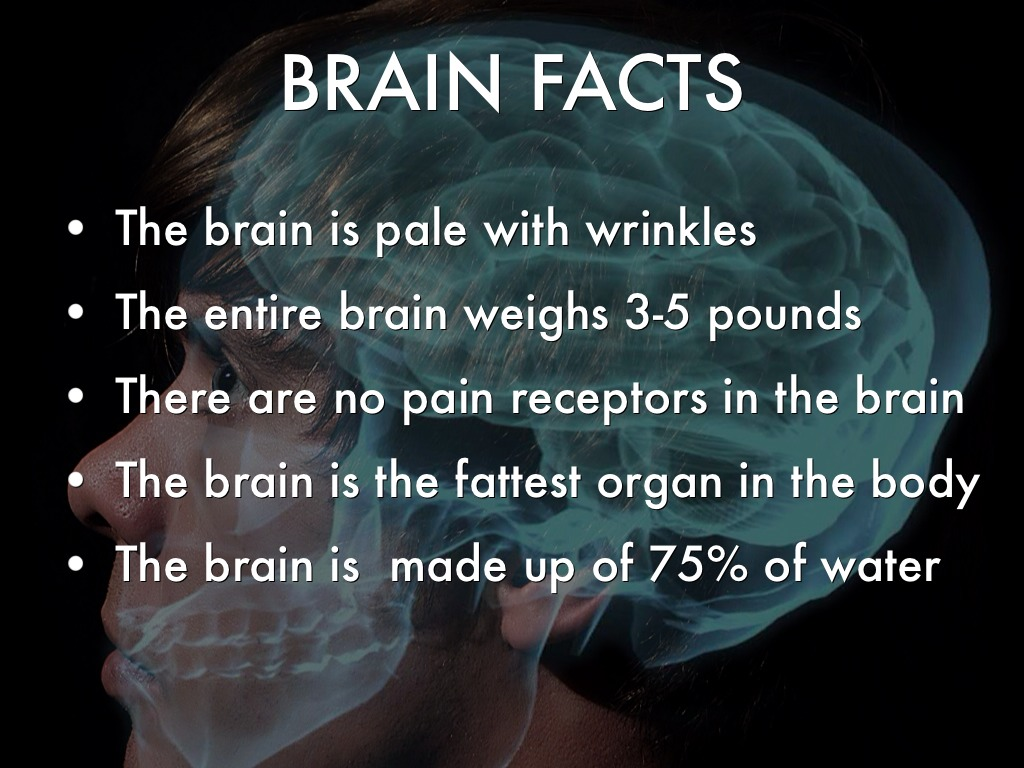 brain facts The brain is one of the most astonishing and intricate parts of the human body here are some strangely interesting facts about your gray matter.