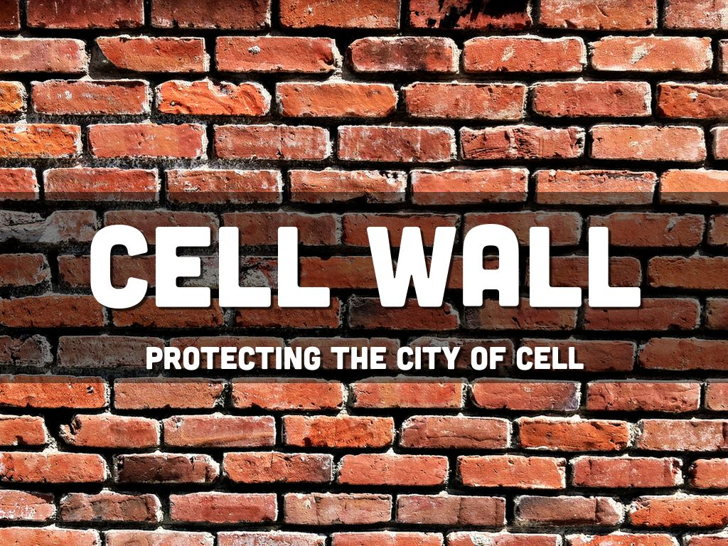 cell wall project by alyssa negron