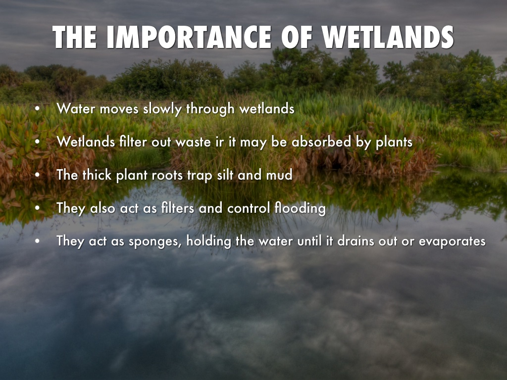 the different types and importance of wetlands