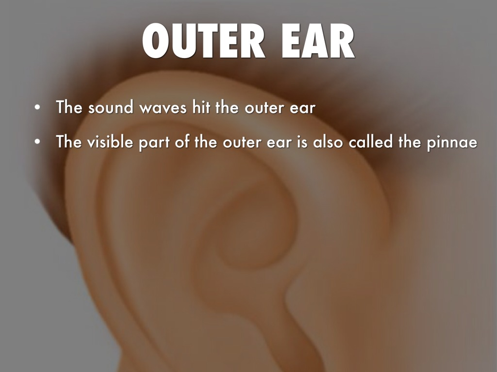what is the visible part of the ear called