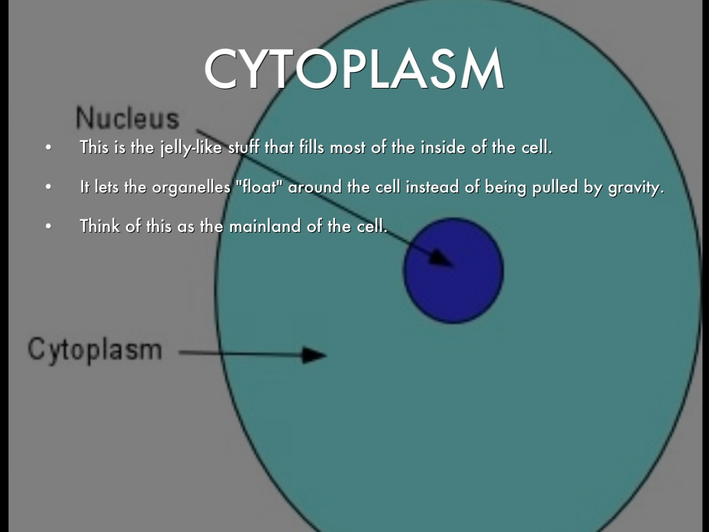 the cytoplasm Start studying the cytoplasm learn vocabulary, terms, and more with flashcards, games, and other study tools.