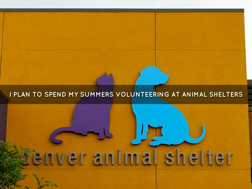 persuasive essays about volunteering at animal shelters I volunteering your time and skills animal shelters ii 2018, from the world wide web:.