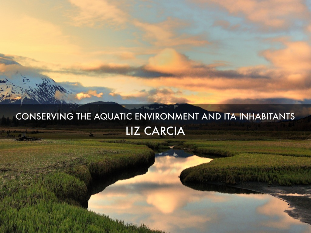Conservation Of The Aquatic Ecosystem
