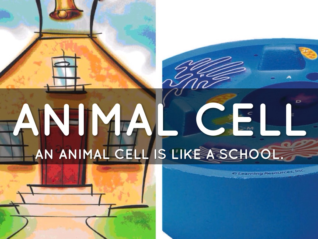 animal cell analogies Cell analogies book you will be making a children's book to show the  be  designing a travel brochure that describes a plant or animal cell as if it were a  real.