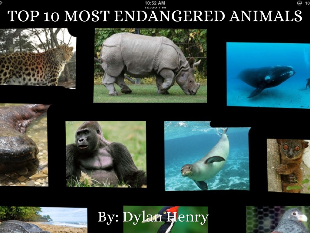 Facts About Endangered Animals Top 11 Facts ...