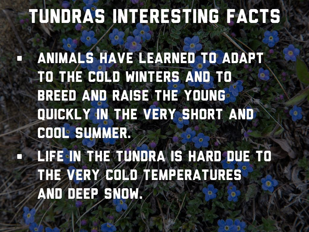 Copy of Kendall Quall Tundra by Matt Danahy