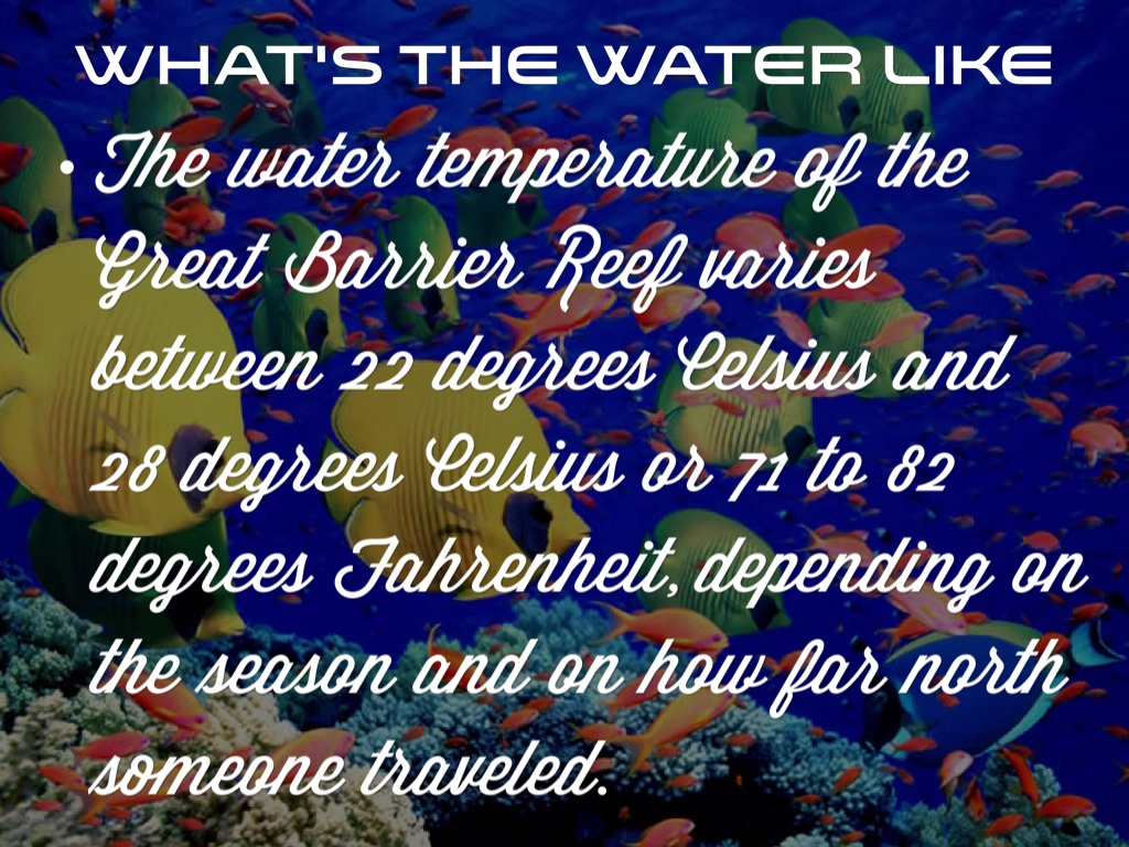 Great Barrier Reef By Courtney Eastman