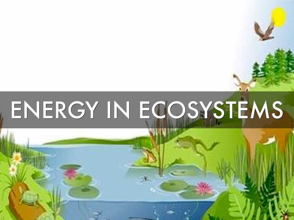 Energy In Ecosystems by Jonathan Ambs