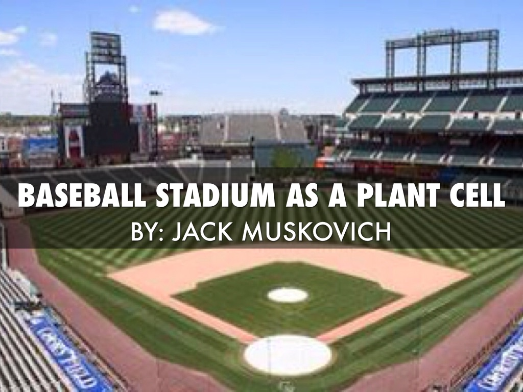 Baseball Stadium As A Plant Cell By Jack Muskovich