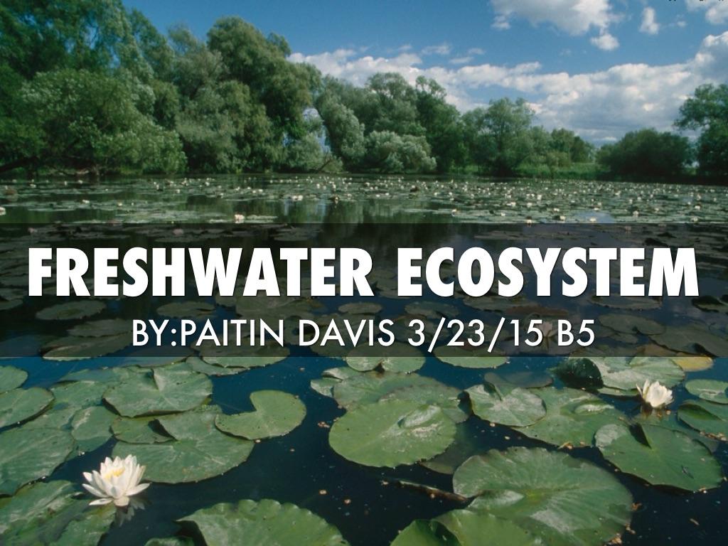 Freshwater Ecosystem by Paitin Davis