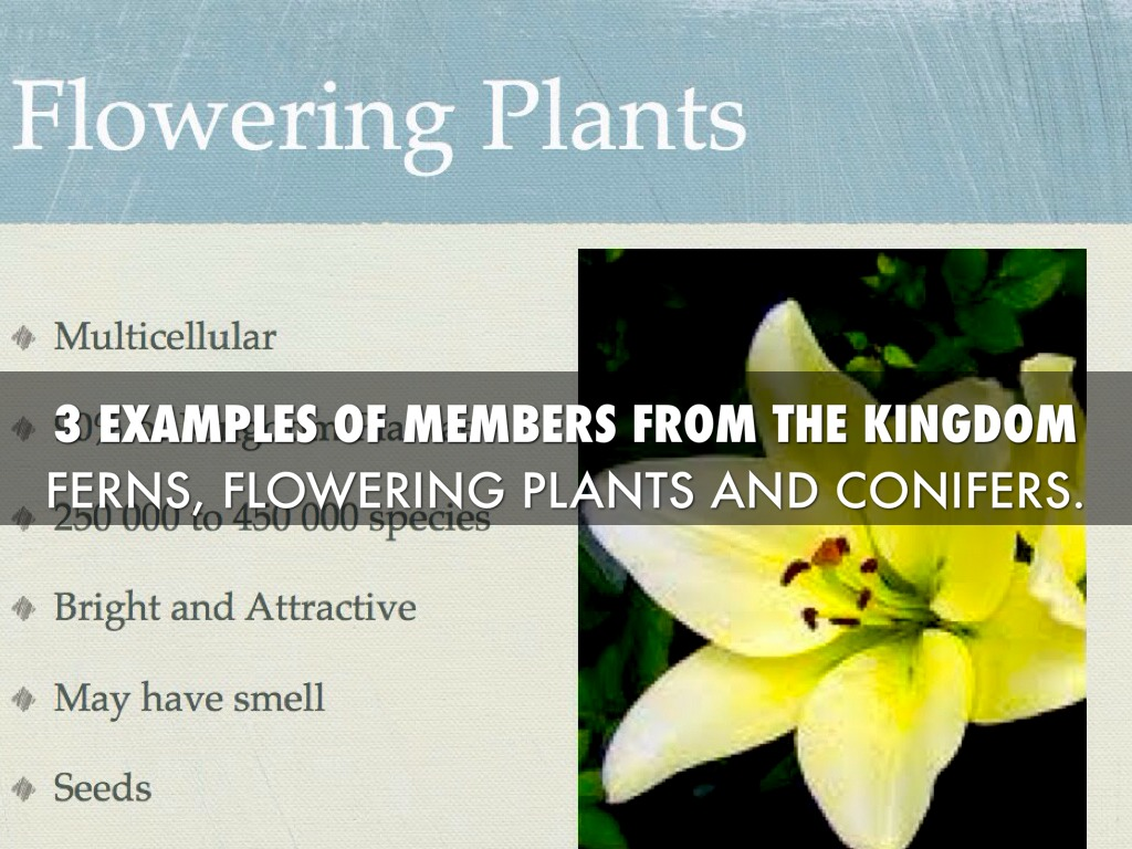 Kingdom Plantae By Nevin Odum