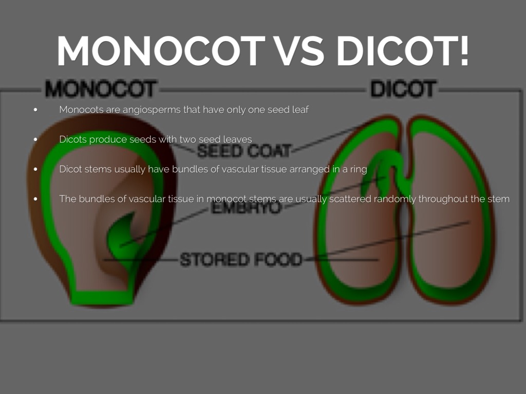 Science project by caitlin clark monocot vs dicot pooptronica