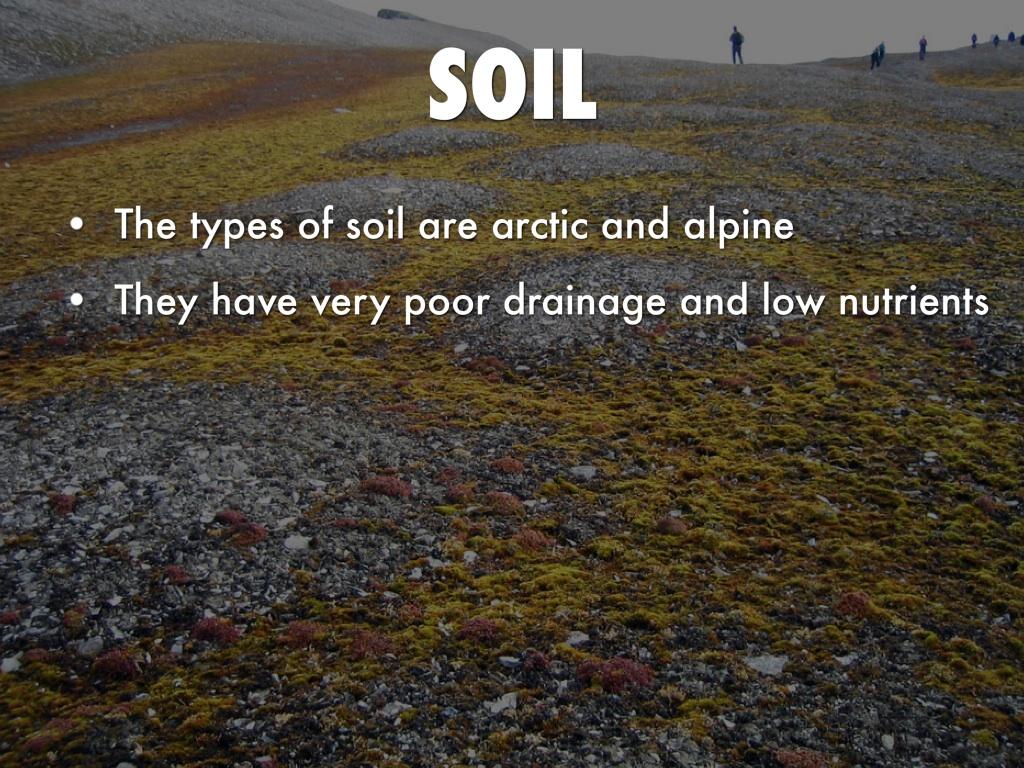 Soil In The Tundra Biome - Best Soil 2017