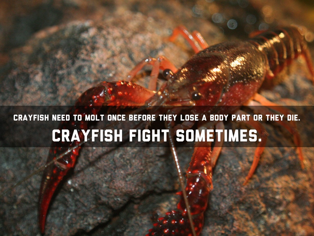 Crayfish By Aj By Aj Stephens-3853