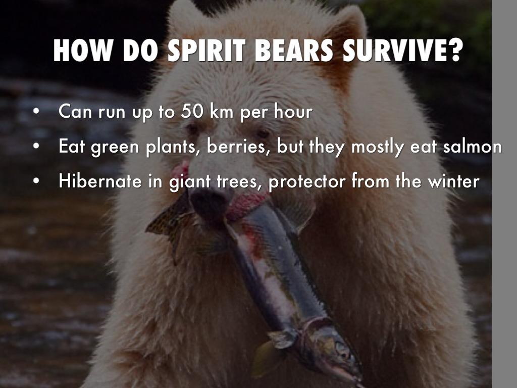 Spirit bear by blivaditis how do spirit bears survive biocorpaavc Choice Image