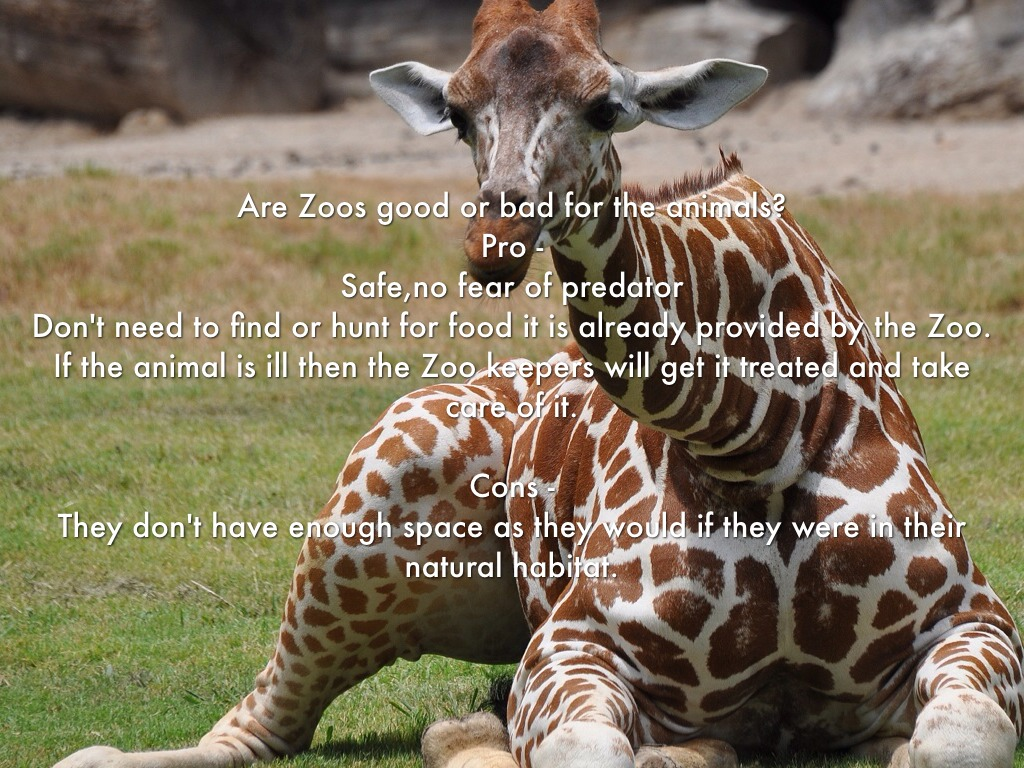 are zoos unethical to animals essay Elite toefl prep the following video contains a sample of the integrated writing task  zoos are unethical  animals do not thrive in zoos.