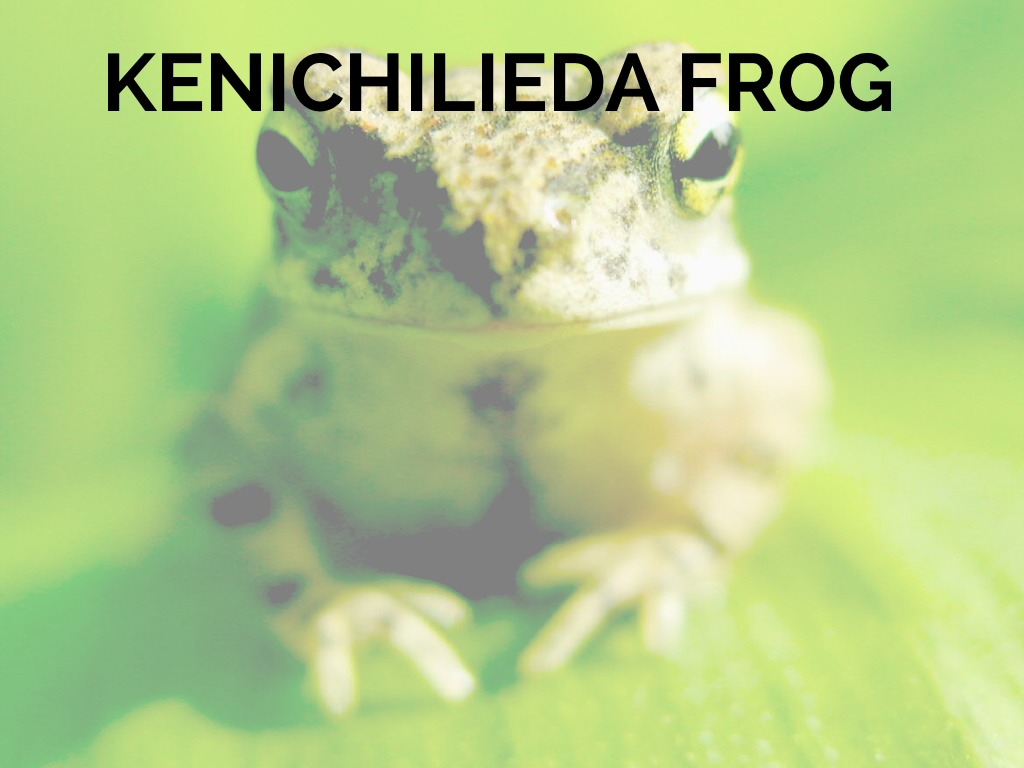 Kenichi Lieda Frog