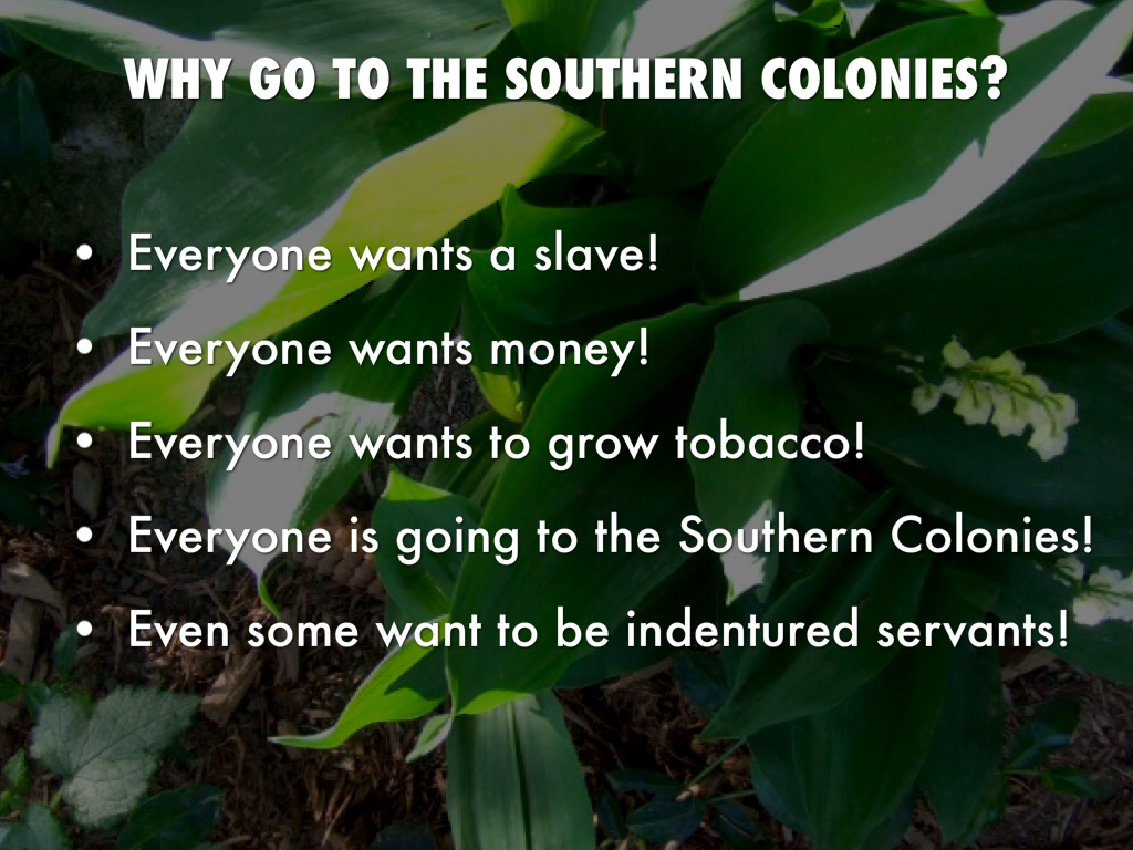 southern colonies travel advertisement by cameron moore
