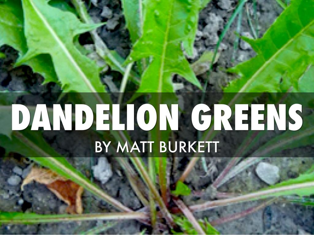Edible Plant