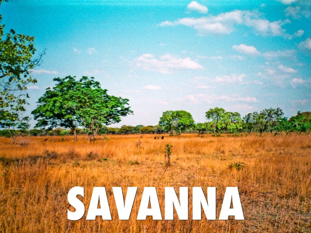 the savanna biome Savanna climate the savanna biome has a wet/dry climate its köppen climate group is aw the astands for a tropical climate, and the wfor a dry season.