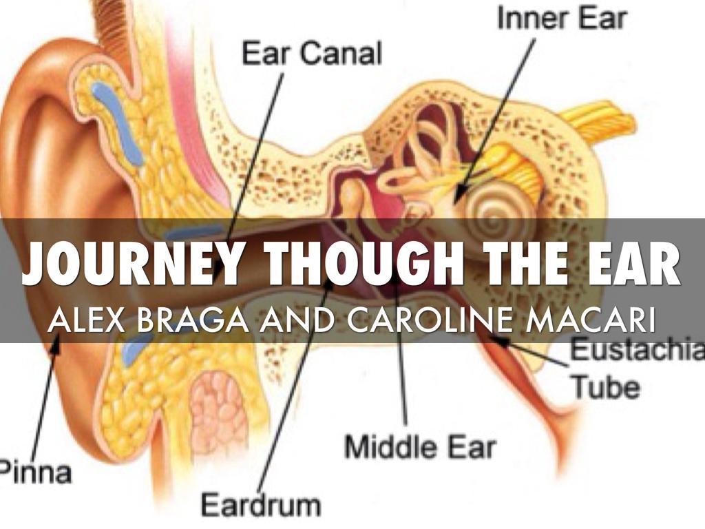 Journey Through Ear by Alex Braga