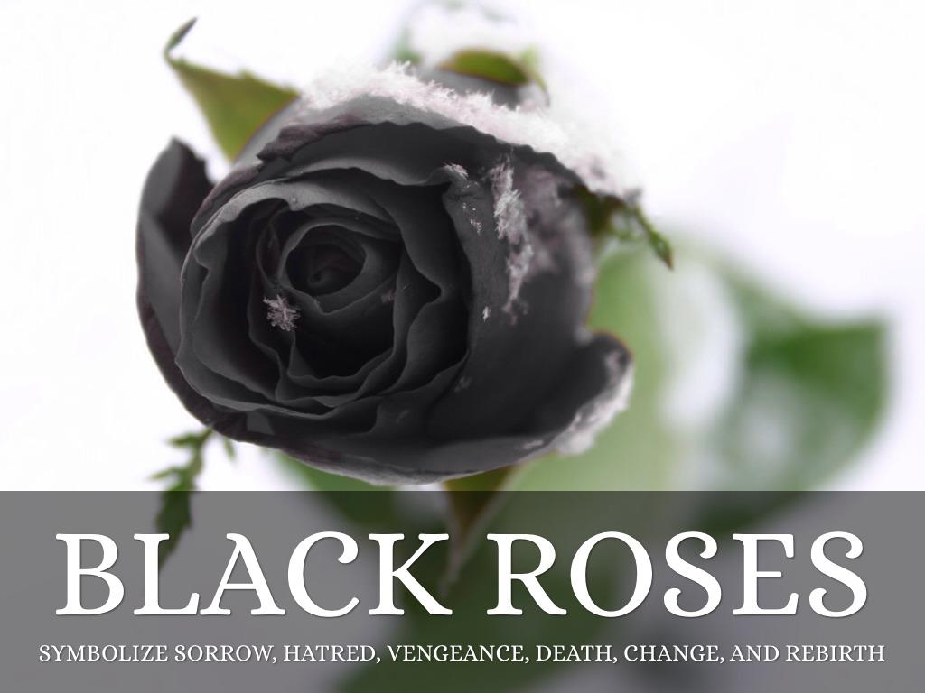 Roses by jen finkel martin 3 buycottarizona