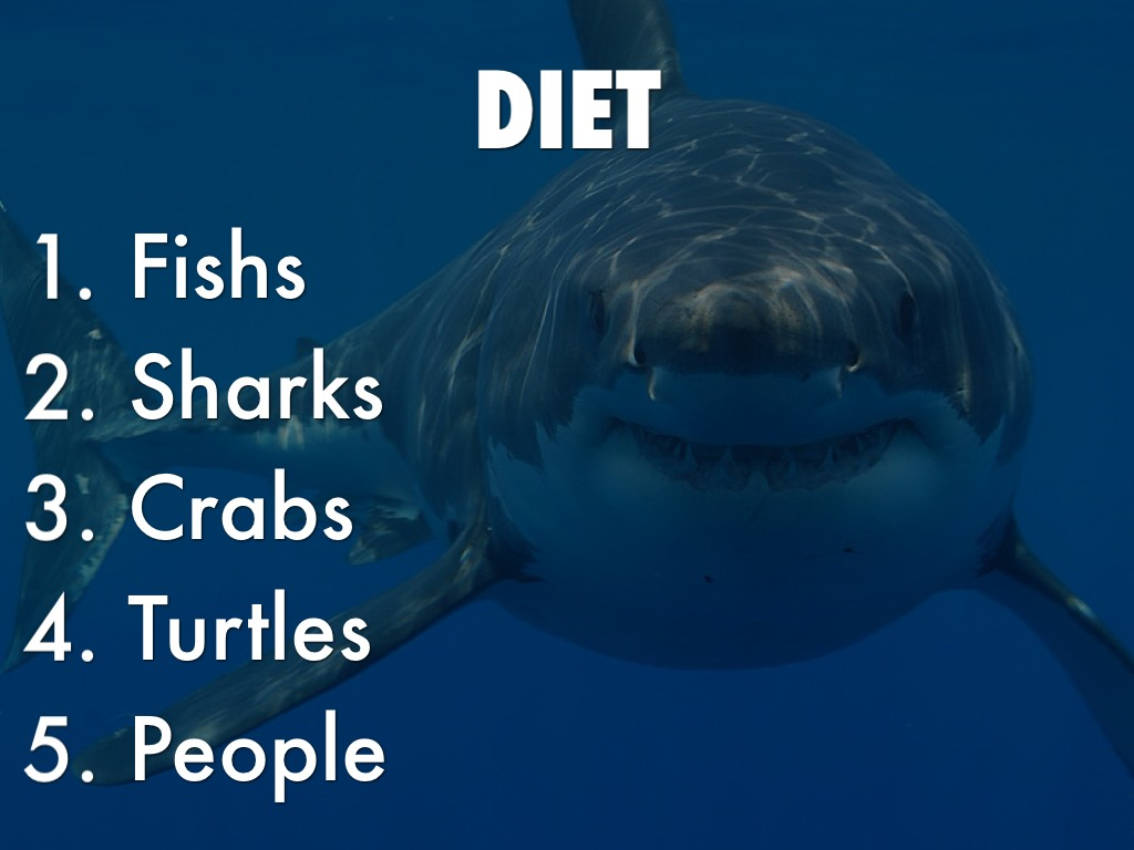 What Do Great White Sharks Eat | Great White Sharks Diet