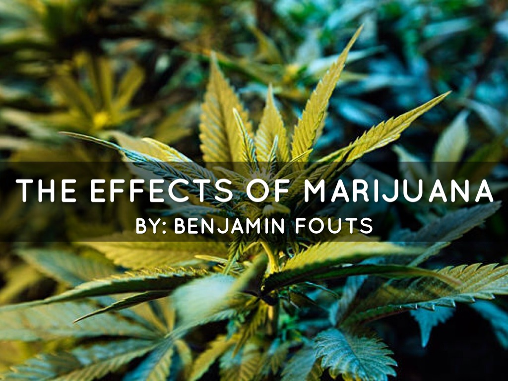 the effects of marijuana in a