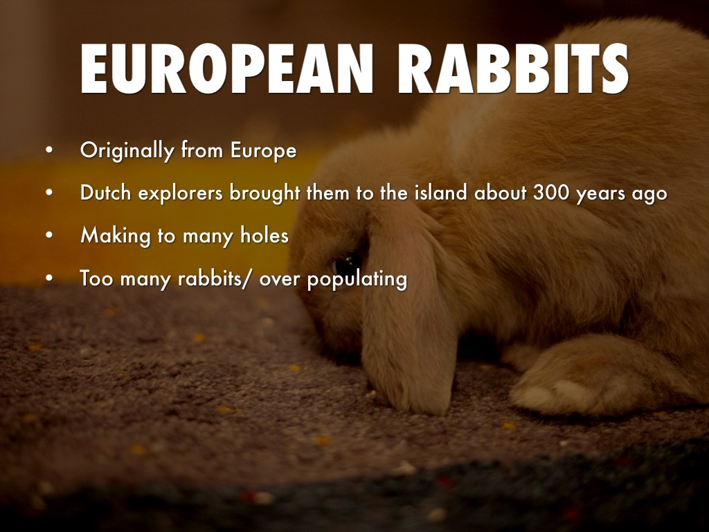 Invasion: killer rabbits and other invasive species