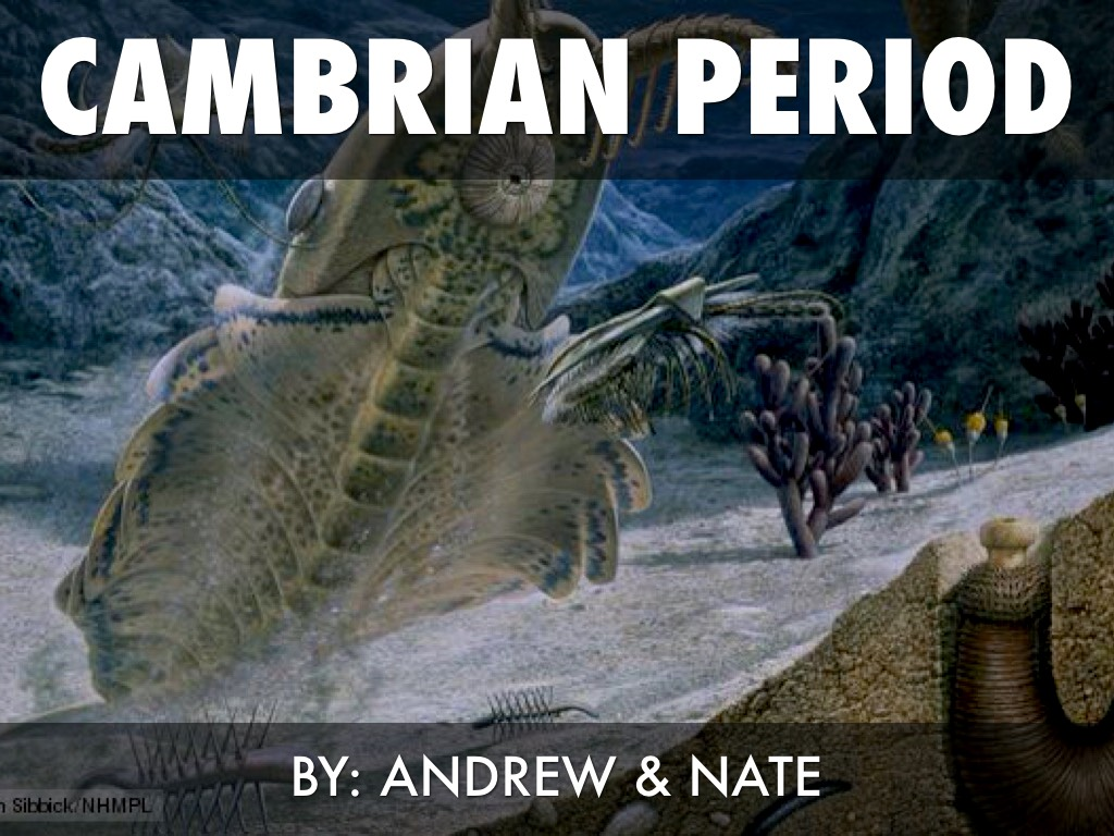 cambrian period The cambrian was a time of mild, equitable climate, when high sea levels covered extensive continental margins sediments deposited on the margins of one of the cambrian continental masses, avalonia, now form the type section in wales.