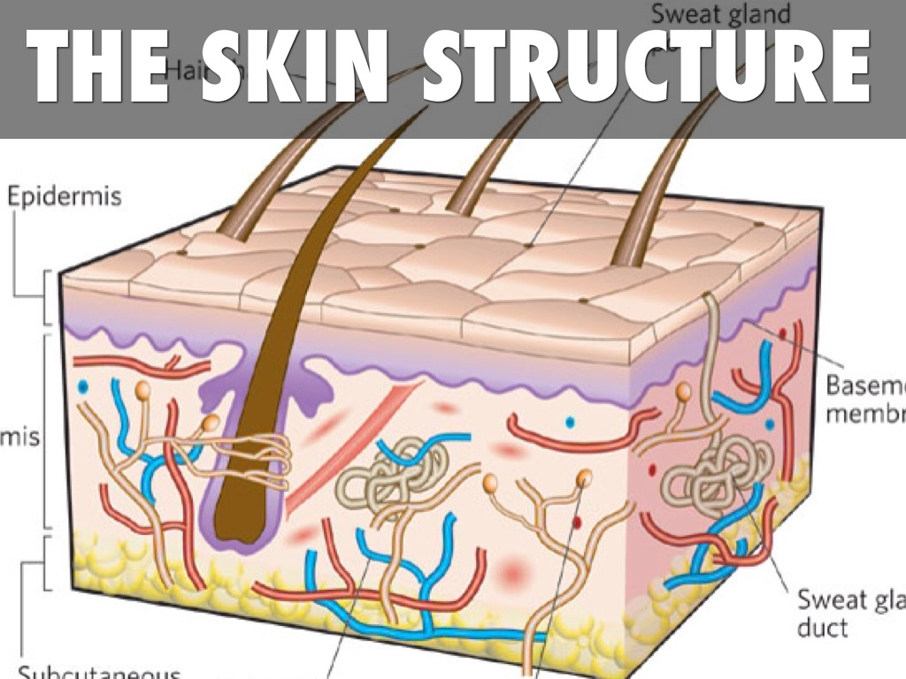how the skin is involved with May is skin cancer awareness month home  get involved  may is skin cancer awareness month skin cancer is also one of the most preventable forms of cancer.