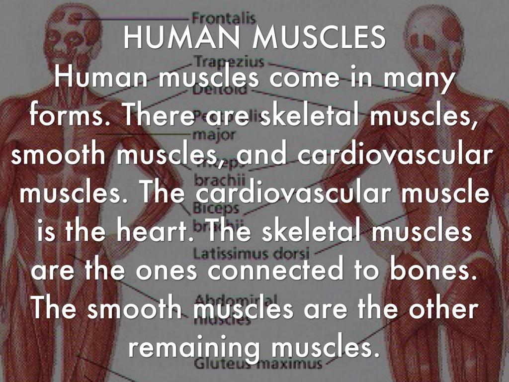 Frog And Human Organs By Hughesn1