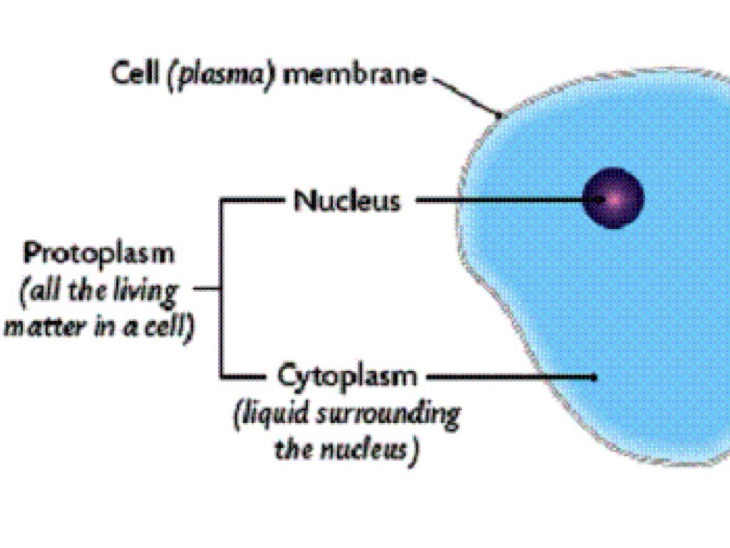 cell and cytoplasm Cytoplasm is a clear, gel-like substance found in all cells everything contained within a cell is found suspended in cytoplasm, except the nucleus, which is separated from the cytoplasm by a.