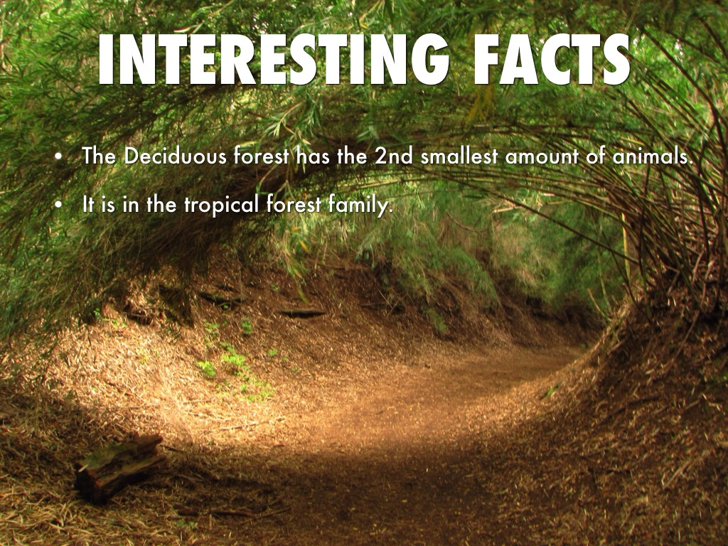 facts about deciduous forest A wide variety of mammals, birds, insects, and reptiles can be found in deciduous forests which fall under the category of dry tropical forests these animals have unique adaptations for various climates.