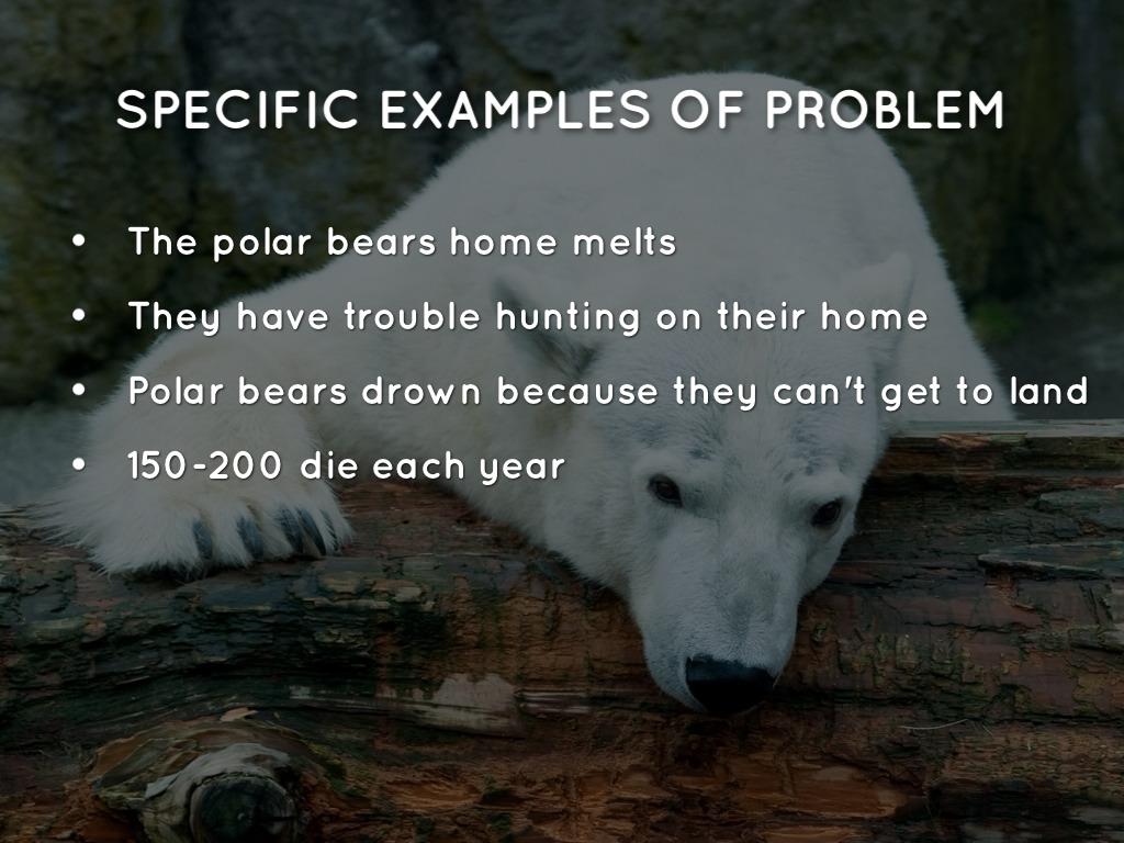 Polar Bears Global Warming Effects