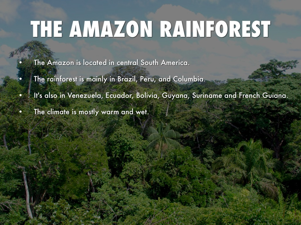 The amazon rainforest by kyle gelatko for Good facts about america